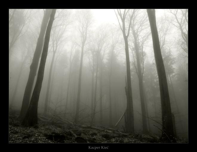 deep woods, part one