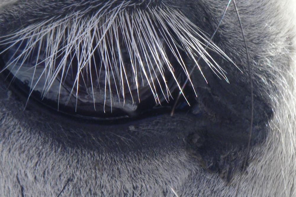 Degradé de gris pour un oeil