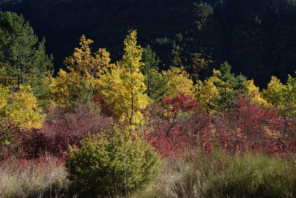 Dégradés d'automne