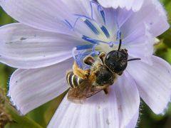 Degustando los últimos granitos de polen