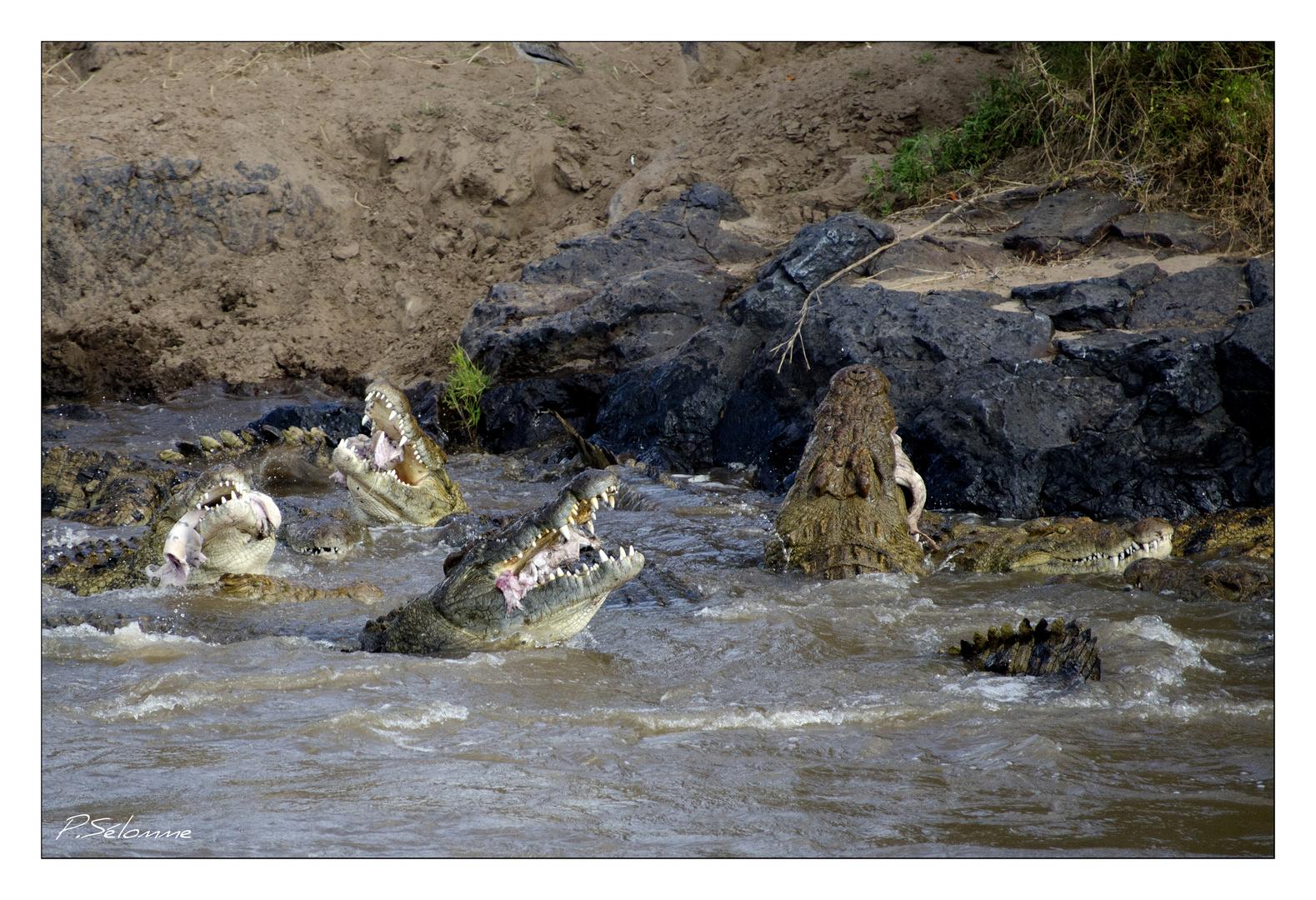 Dégustation d'hippo ......