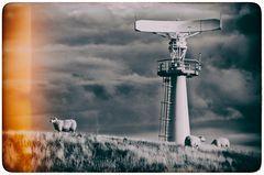 Dei sogni degli androidi e delle pecore elettriche ( P.K. Dick )