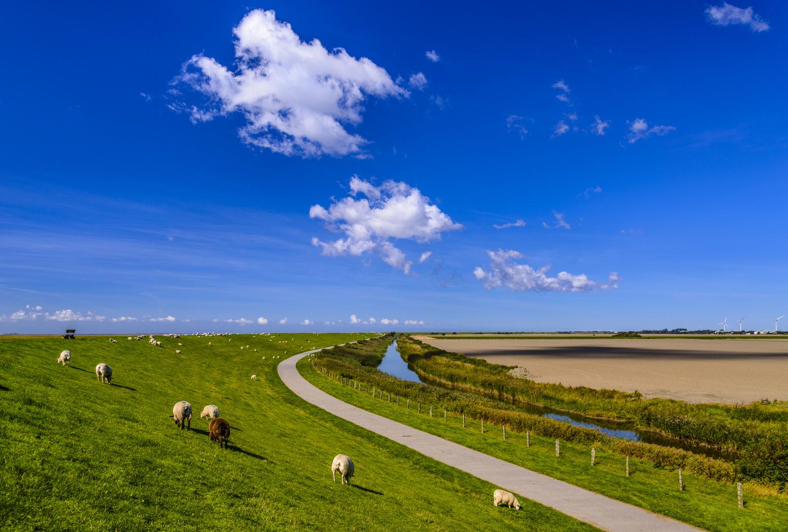 Deich, Schafe, Marschland, Nordfriesland Foto & Bild | sommer ...
