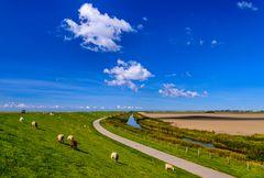 Deich, Schafe, Marschland, Nordfriesland