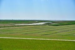 Deichvorland in Westerver