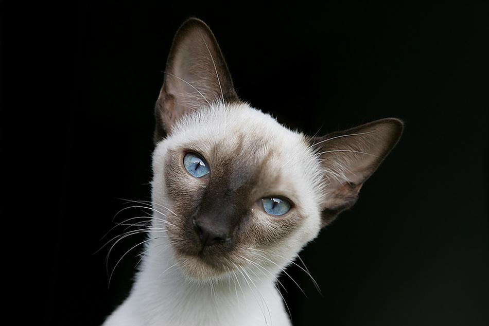 Deine blauen Augen