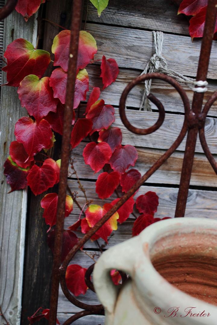 dekorativer Wein