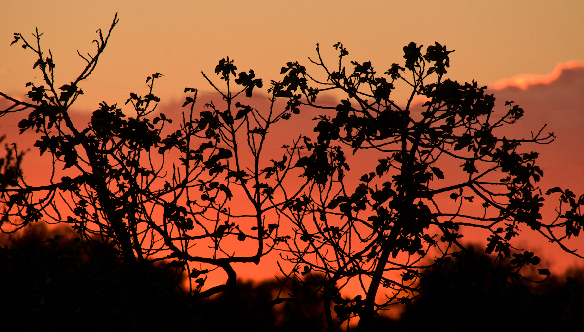 dekorierter Sonnenuntergang