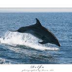 Delfin #2  [Reload]