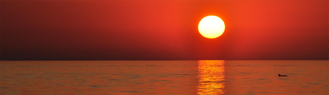 Delfin betrachtet Sonnenuntergang