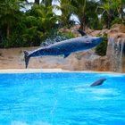 Delfin im Loro Parque in Teneriffa