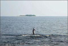 Delfin-Tanz