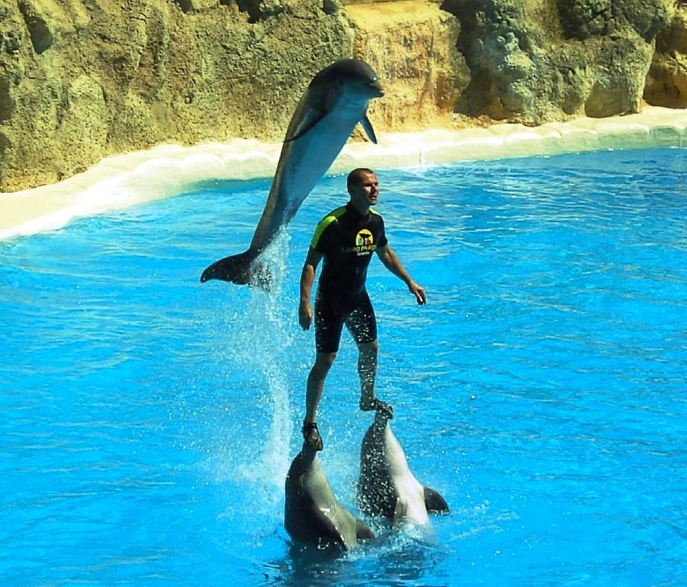 delfine foto amp bild tiere wildlife s228ugetiere bilder
