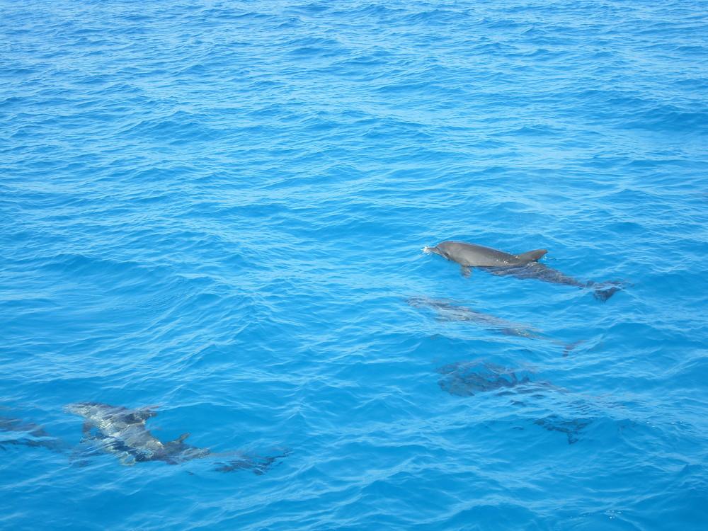 Delfine - Getroffen in Hurghada2