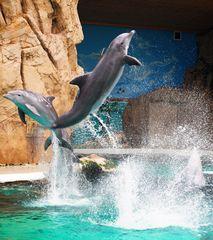 Delfine in Duisburger Zoo