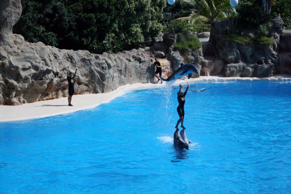 delfines en loro park