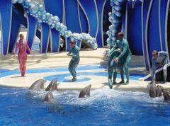 Delfini Americani