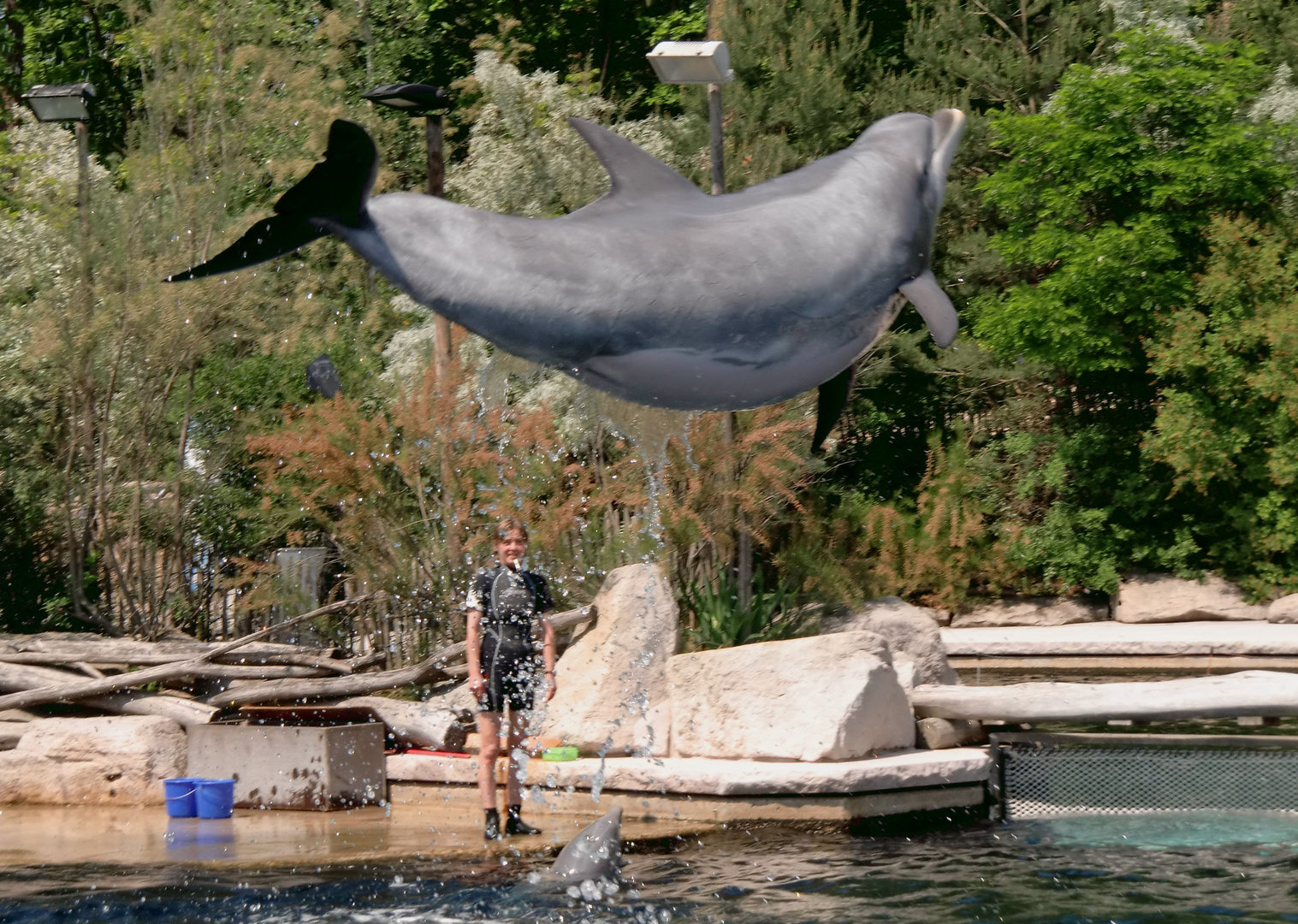 Delfinshow Nürnberg
