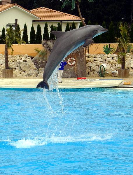 Delfinshow im Conny-Land