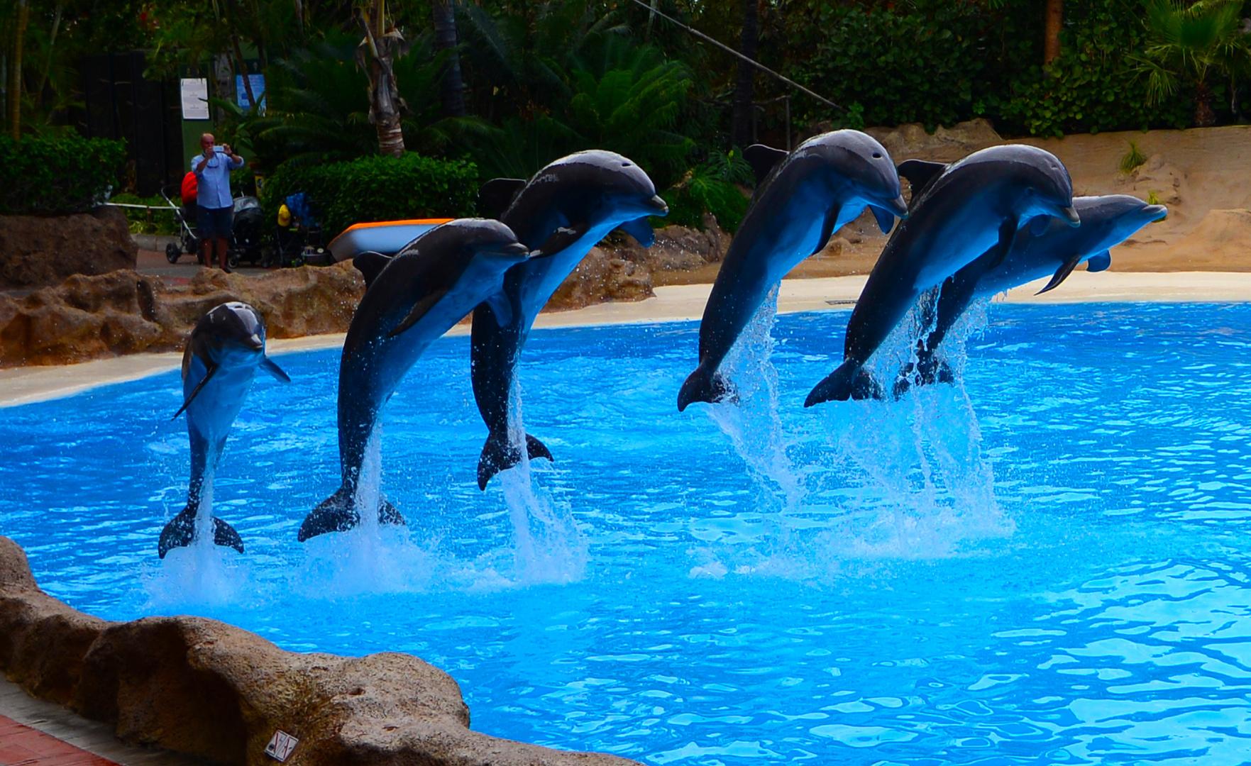 Delfinshow 8