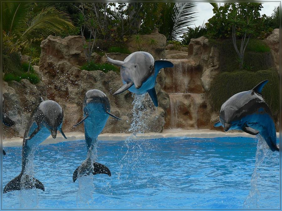 Delfinshow im Loro Parque (Teneriffa)