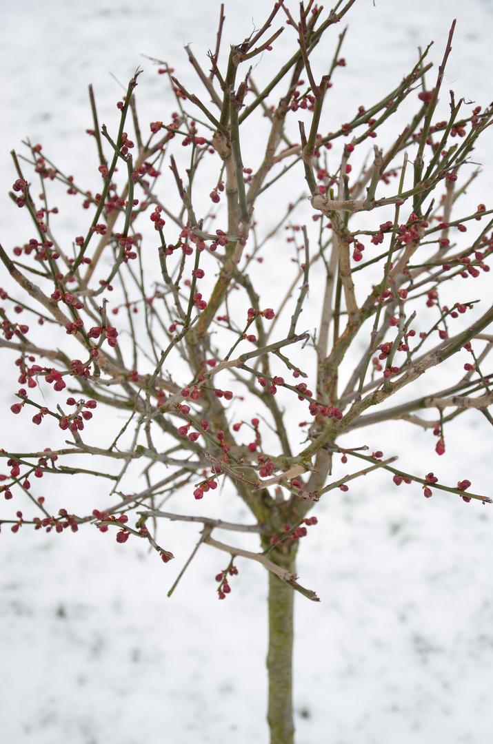 Delicadeza invernal