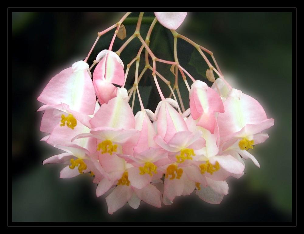 délicat bouquet