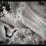 ....delicate evanescence