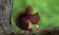 Délicieuse cacahuète