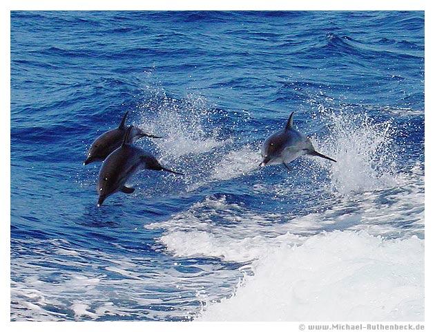 Delphin 2 - Gran Canaria