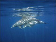 Delphin-Begegnung, eigentlich vorgesehene Version