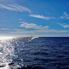 Delphin gefunden!