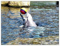 Delphine bei Spielen