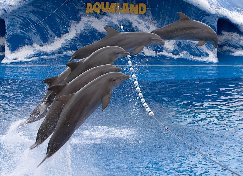 Delphine im Aqualand