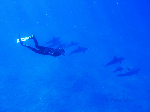 Delphine im offenen Meer