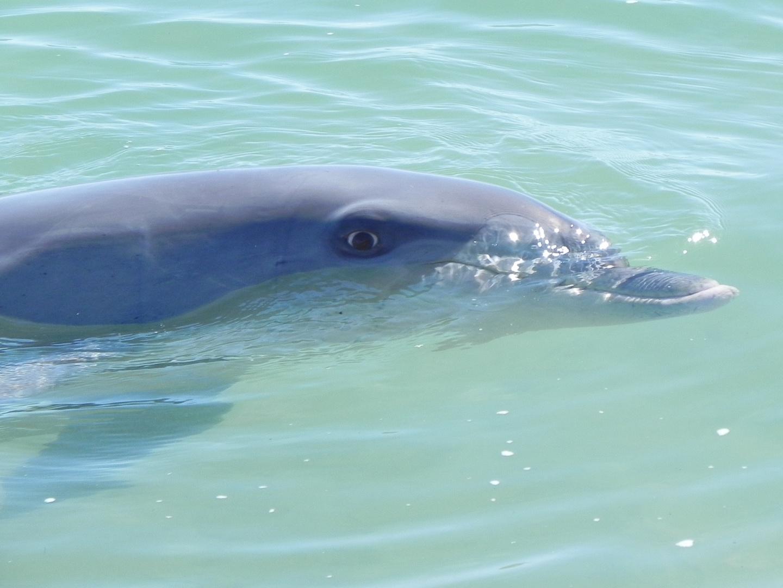 Delphine Westküste Australien 04-2013