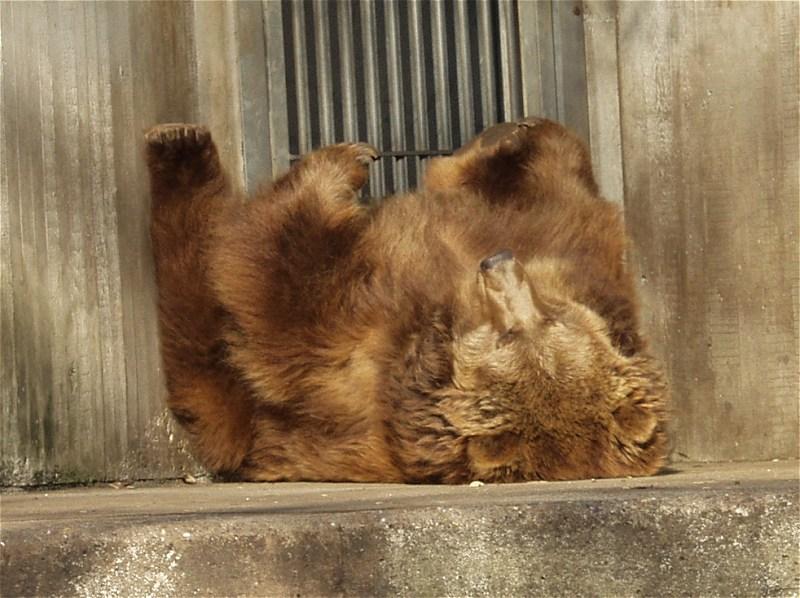 Dem Bär ist langweilig...