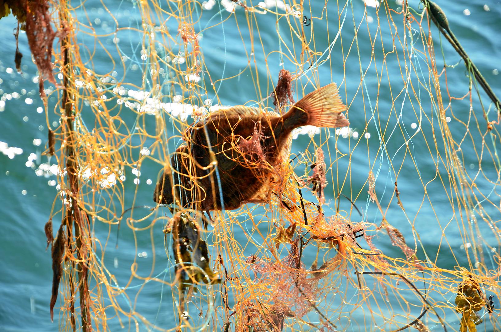 Dem Fischer ins Netz geschaut...