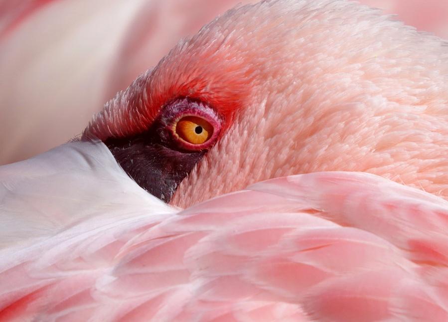 Dem Flamingo