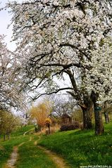 Dem Frühling ...