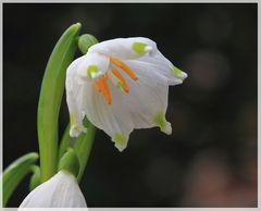Dem Frühling ins Maul geschaut
