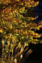 dem Herbst entgegen