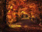 Dem Herbst folgen...