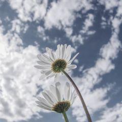dem Himmel entgegen