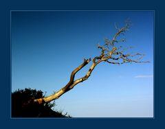 """...dem Himmel näher als dem Tod... - AUSSTELLUNGS-FOTO """"WERDEN UND VERGEHEN"""""""