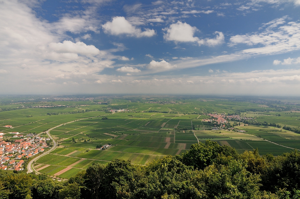 Dem Pälzer soi Heimat. Das Weinbaugebiet Pfalz (Aufnahme von der Madenburg)......