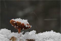 Dem Schnee trotzen