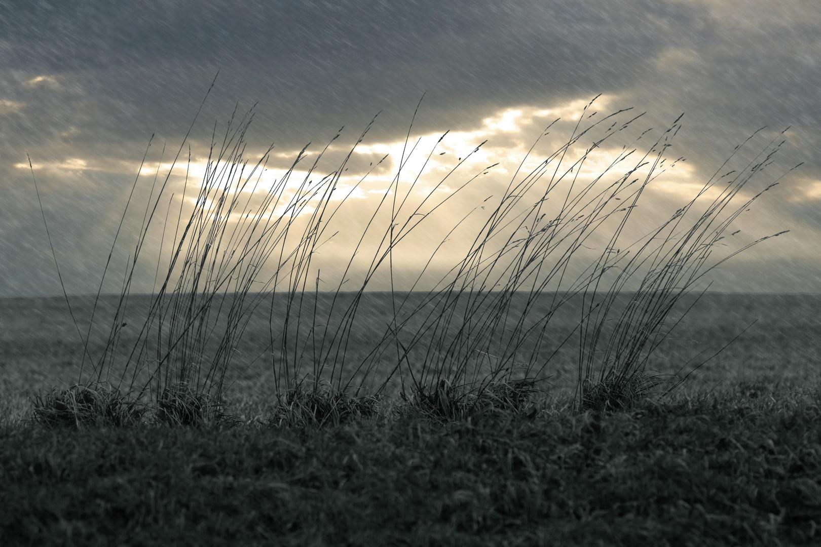 Dem Wind und Regen ausgesetzt