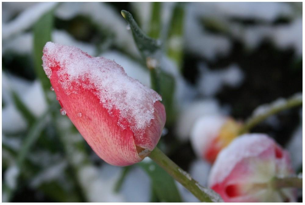 dem Winter entfliehen
