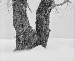 Dem Winter trotzen